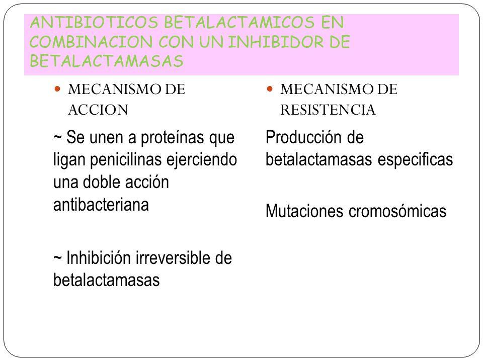 ANTIBIOTICOS BETALACTAMICOS EN COMBINACION CON UN INHIBIDOR DE BETALACTAMASAS MECANISMO DE ACCION ~ Se unen a proteínas que ligan penicilinas ejercien
