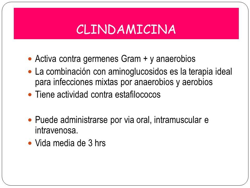 CLINDAMICINA Activa contra germenes Gram + y anaerobios La combinación con aminoglucosidos es la terapia ideal para infecciones mixtas por anaerobios
