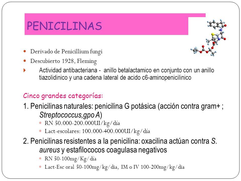PENICILINAS Derivado de Penicillium fungi Descubierto 1928, Fleming Actividad antibacteriana - anillo betalactamico en conjunto con un anillo tiazolid