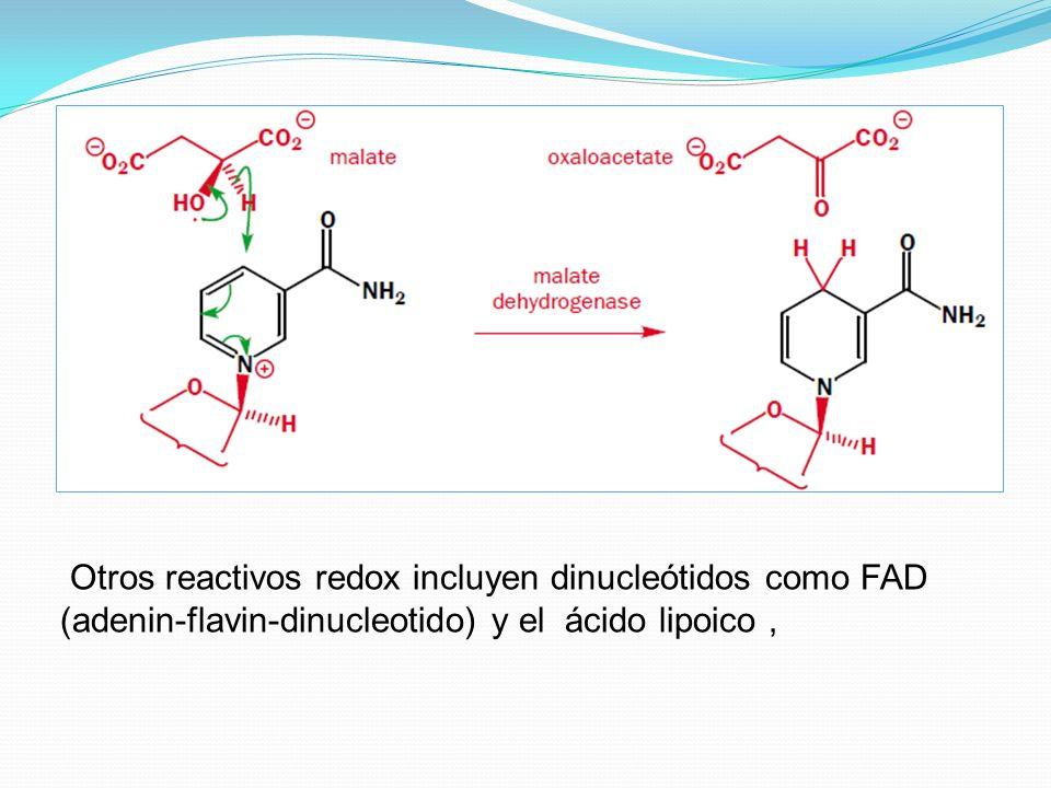 Otros reactivos redox incluyen dinucleótidos como FAD (adenin-flavin-dinucleotido) y el ácido lipoico,