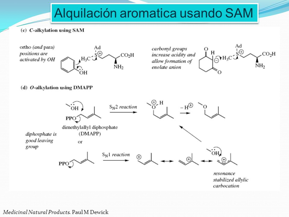 Alquilación aromatica usando SAM Medicinal Natural Products. Paul M Dewick