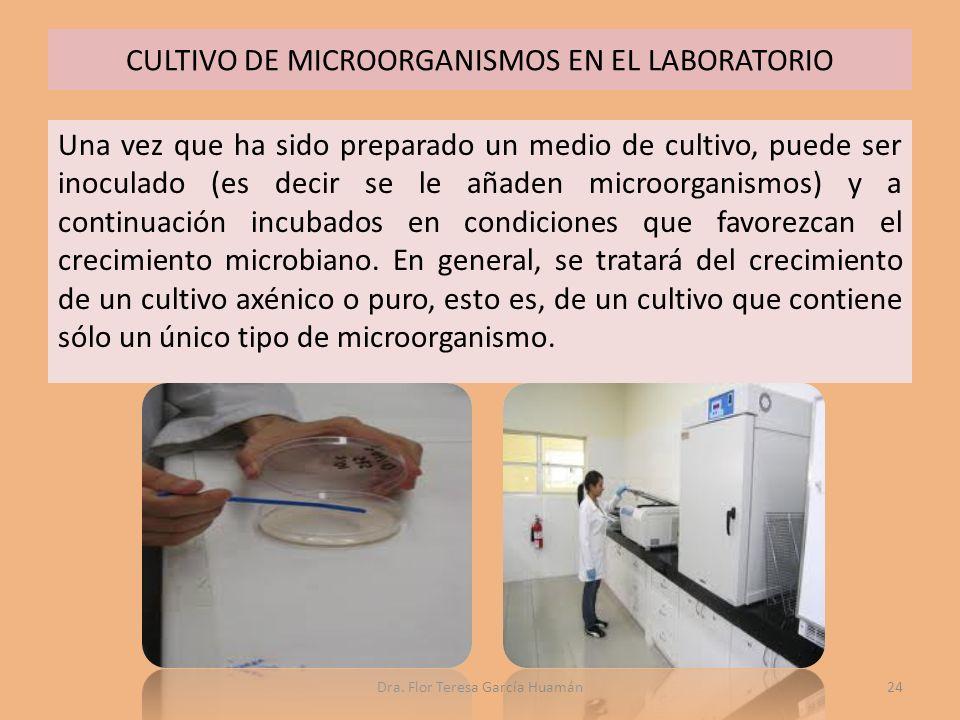 CULTIVO DE MICROORGANISMOS EN EL LABORATORIO Una vez que ha sido preparado un medio de cultivo, puede ser inoculado (es decir se le añaden microorganismos) y a continuación incubados en condiciones que favorezcan el crecimiento microbiano.