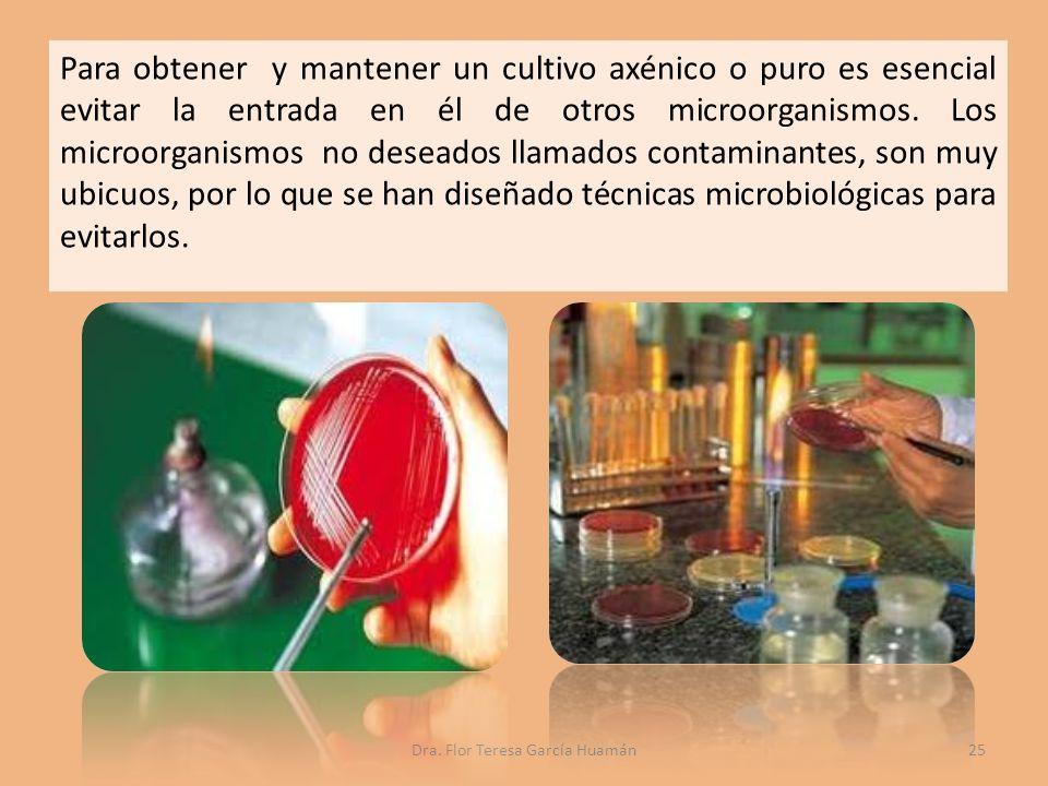 Para obtener y mantener un cultivo axénico o puro es esencial evitar la entrada en él de otros microorganismos.