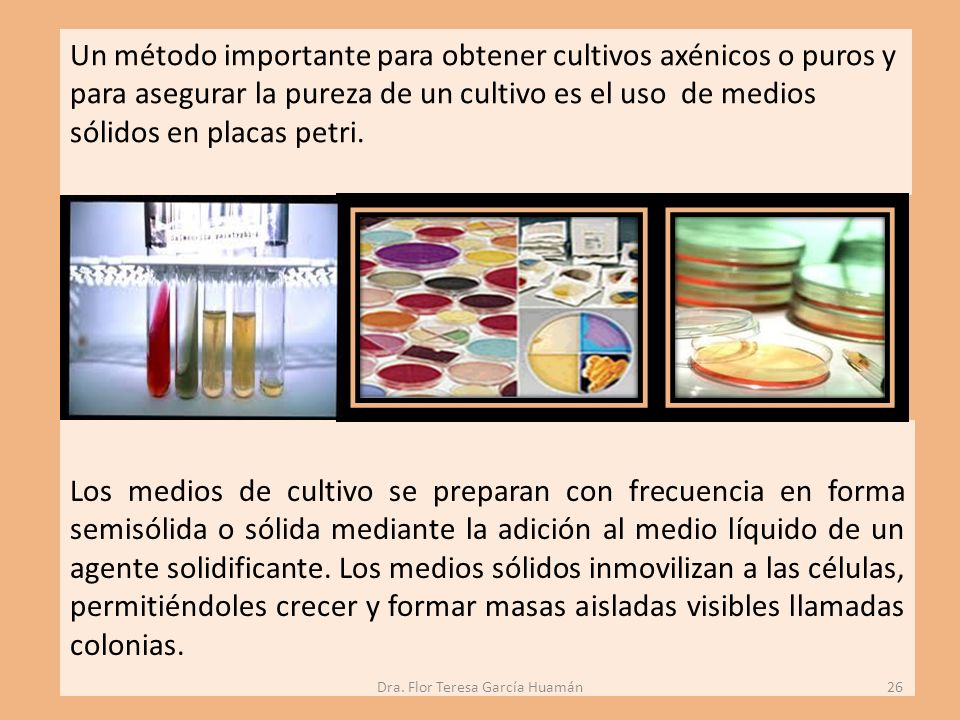Un método importante para obtener cultivos axénicos o puros y para asegurar la pureza de un cultivo es el uso de medios sólidos en placas petri.