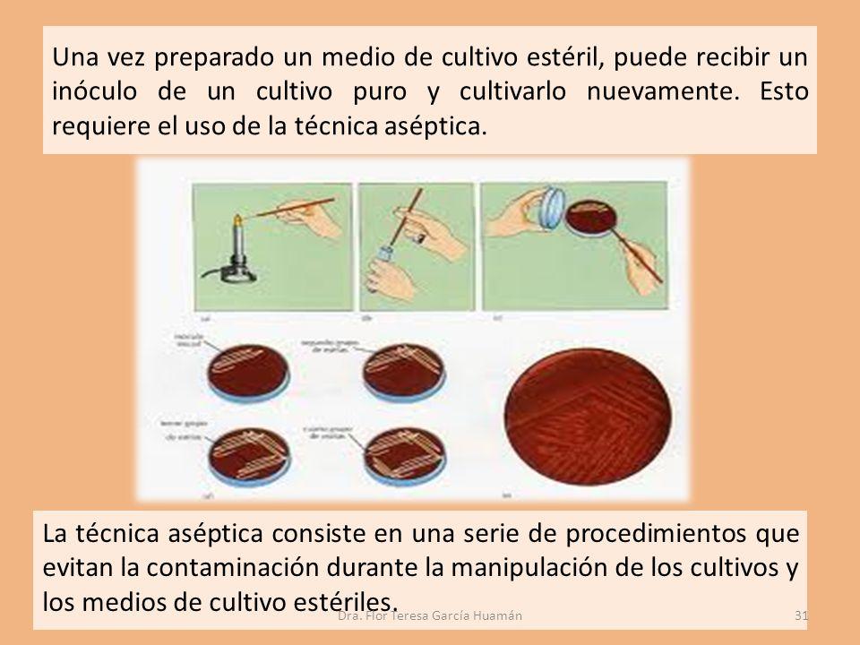 Una vez preparado un medio de cultivo estéril, puede recibir un inóculo de un cultivo puro y cultivarlo nuevamente.