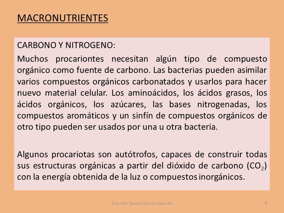 Las colonias bacterianas pueden ser de forma y tamaño variable dependiendo del organismo, las condiciones de cultivo, el suministro de nutrientes (como la cantidad de oxígeno presente) y otros parámetros fisiológicos.