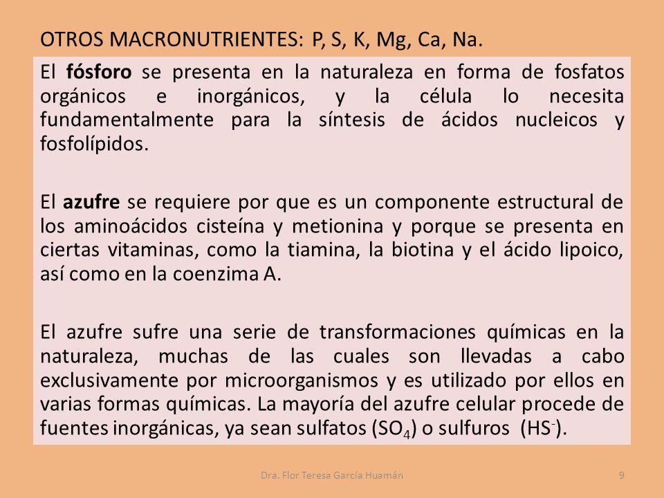 OTROS MACRONUTRIENTES: P, S, K, Mg, Ca, Na.