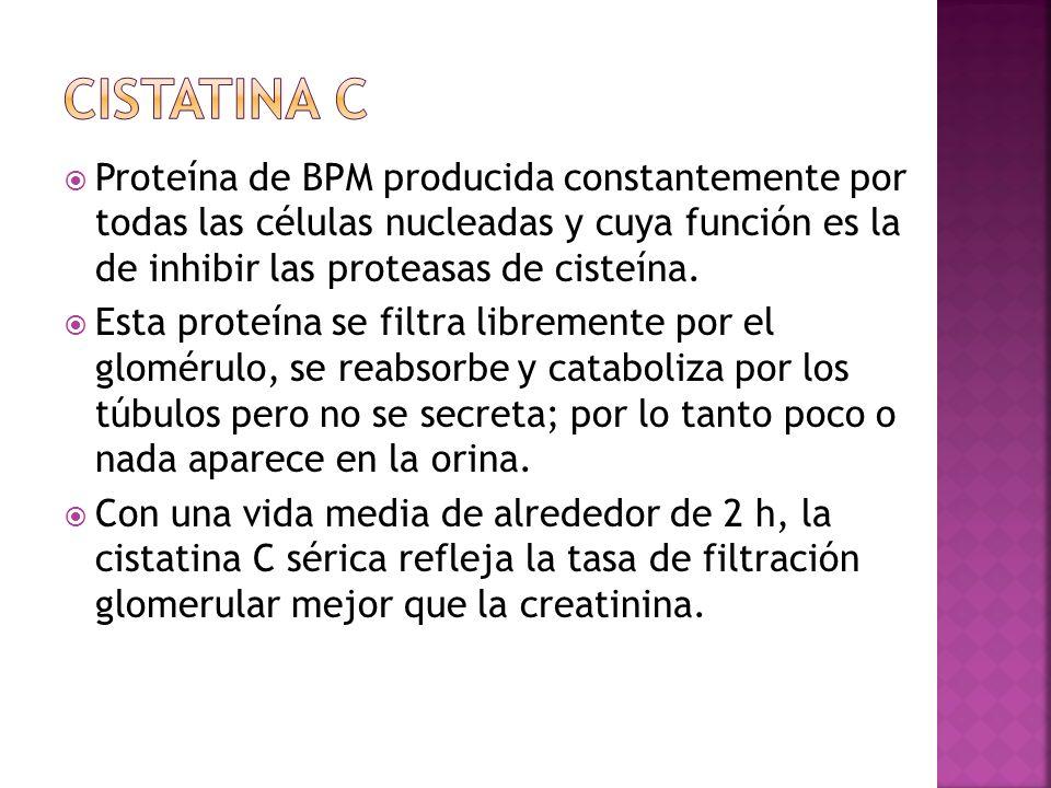 Proteína de BPM producida constantemente por todas las células nucleadas y cuya función es la de inhibir las proteasas de cisteína. Esta proteína se f