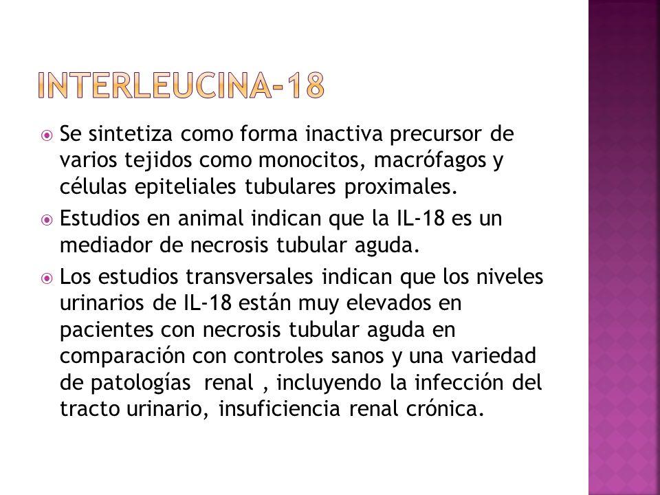 Se sintetiza como forma inactiva precursor de varios tejidos como monocitos, macrófagos y células epiteliales tubulares proximales. Estudios en animal