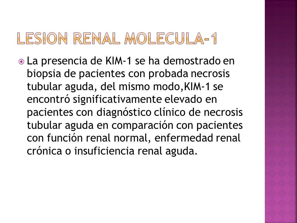 La presencia de KIM-1 se ha demostrado en biopsia de pacientes con probada necrosis tubular aguda, del mismo modo,KIM-1 se encontró significativamente