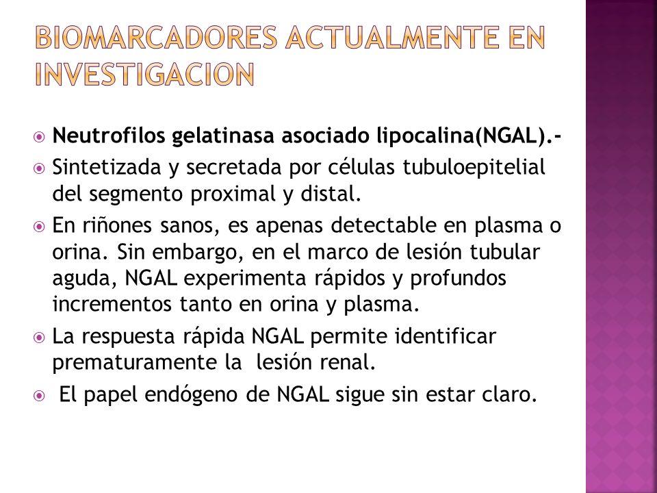 Neutrofilos gelatinasa asociado lipocalina(NGAL).- Sintetizada y secretada por células tubuloepitelial del segmento proximal y distal. En riñones sano