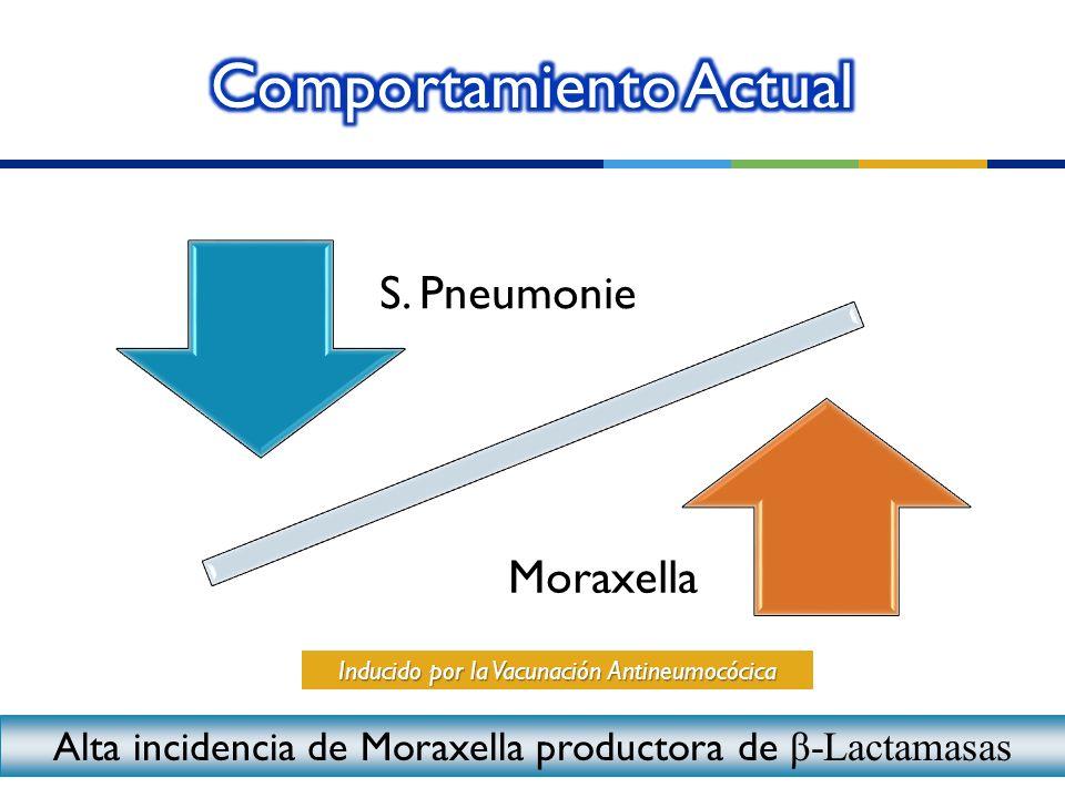 S. Pneumonie Moraxella Inducido por la Vacunación Antineumocócica Alta incidencia de Moraxella productora de β-Lactamasas