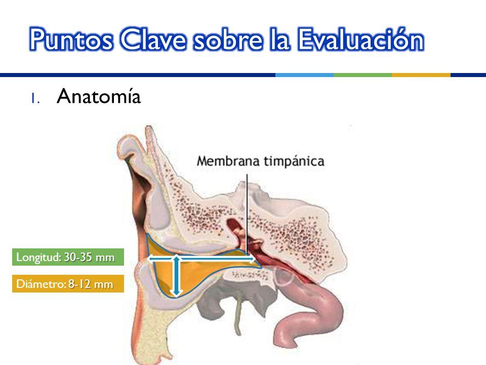 1. Anatomía : 30-35 mm Longitud: 30-35 mm 8-12 mm Diámetro: 8-12 mm