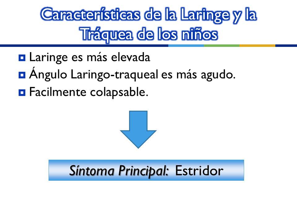 Laringe es más elevada Ángulo Laringo-traqueal es más agudo. Facilmente colapsable. Síntoma Principal: Síntoma Principal: Estridor
