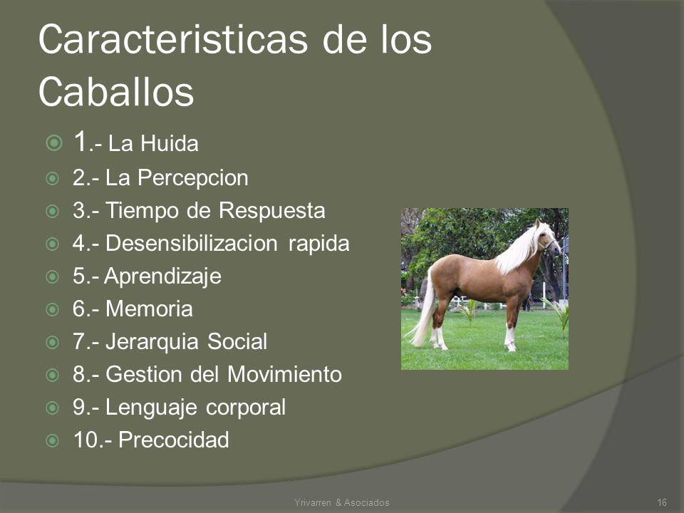Es la utilización de nuestro Caballo Peruano de Paso para la educación laboral dentro de las empresas. 15Yrivarren & Asociados