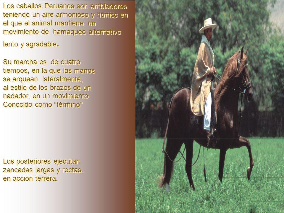 La tradicional prestancia,el garbo y la personalidad del caballo nacional, están íntimamente ligados al brío oexcelencia nerviosa. El brío es la carac