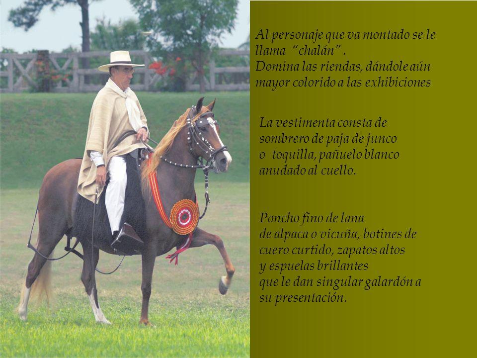 El caballo Peruano de Paso no es un caballo grande, tampoco tiene características de un caballo galopador. El caballo Peruano de Paso no es un caballo