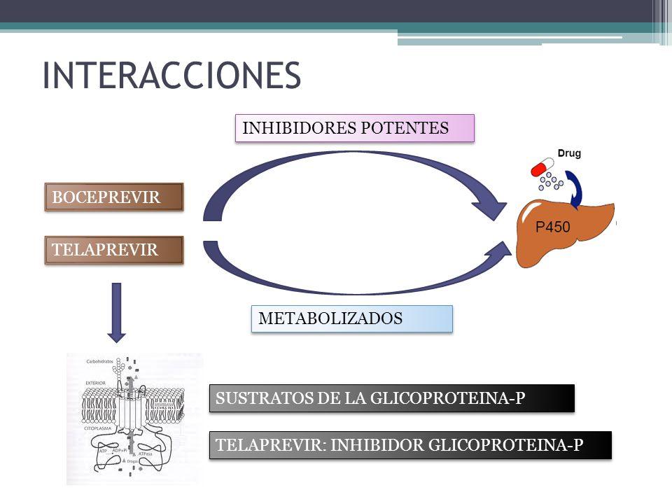INTERACCIONES BOCEPREVIR INHIBIDORES POTENTES METABOLIZADOS SUSTRATOS DE LA GLICOPROTEINA-P TELAPREVIR TELAPREVIR: INHIBIDOR GLICOPROTEINA-P