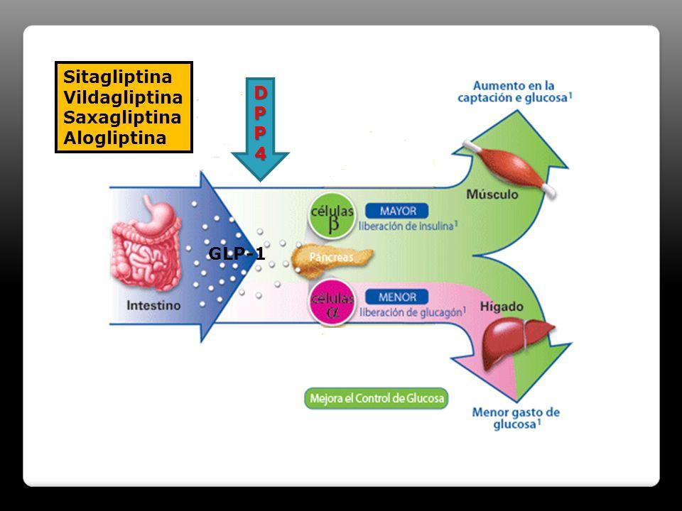 DPP4DPP4DPP4DPP4 Sitagliptina Vildagliptina Saxagliptina Alogliptina GLP-1
