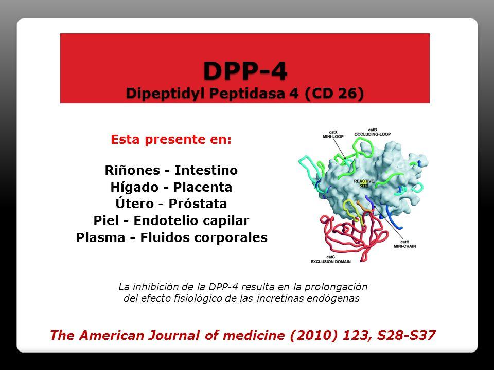 DPP-4 Dipeptidyl Peptidasa 4 (CD 26) Es la causante de la rápida degradación de las INCRETINAS. Esta presente en: Riñones - Intestino Hígado - Placent