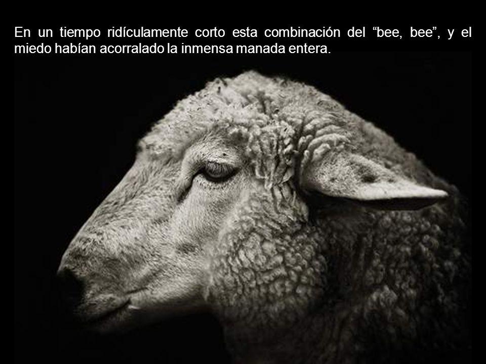 A cualquier rezagado que no se ajustó a esta mentalidad bee, bee le fue dada una dosis de miedo del perro ovejero y luego también se apresuró en la lí