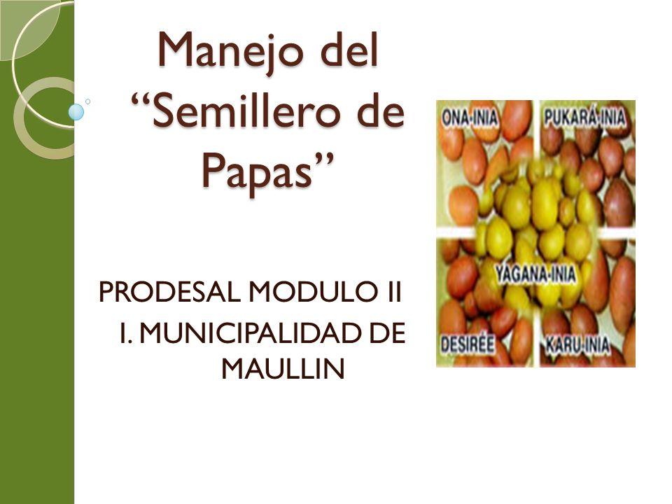 Manejo del Semillero de Papas PRODESAL MODULO II I. MUNICIPALIDAD DE MAULLIN