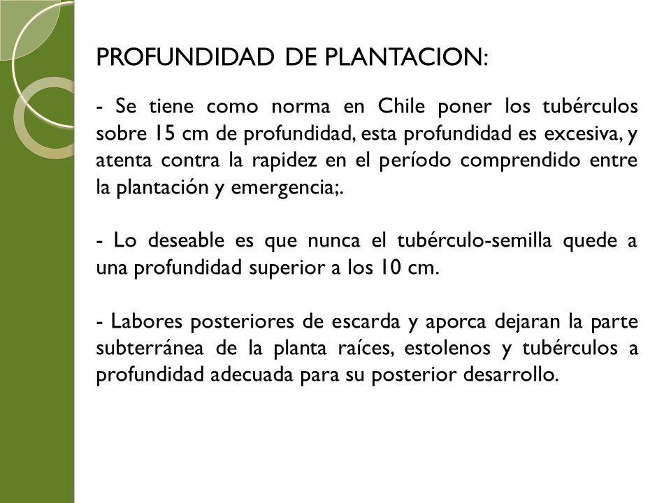 PROFUNDIDAD DE PLANTACION: - Se tiene como norma en Chile poner los tubérculos sobre 15 cm de profundidad, esta profundidad es excesiva, y atenta cont