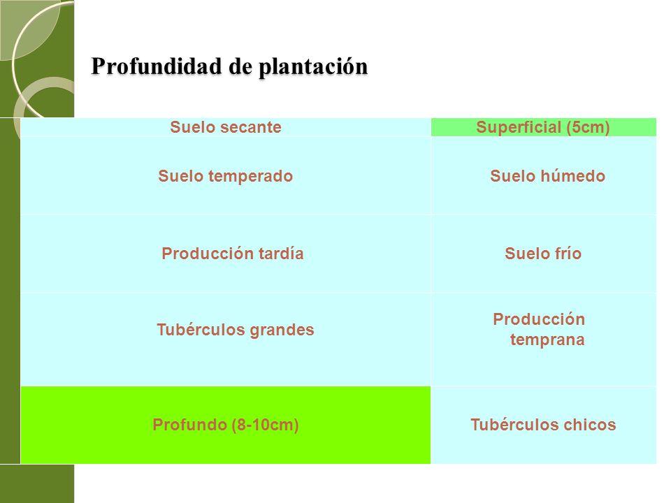 Profundidad de plantación Suelo secanteSuperficial (5cm) Suelo temperado Suelo húmedo Producción tardíaSuelo frío Tubérculos grandes Producción tempra
