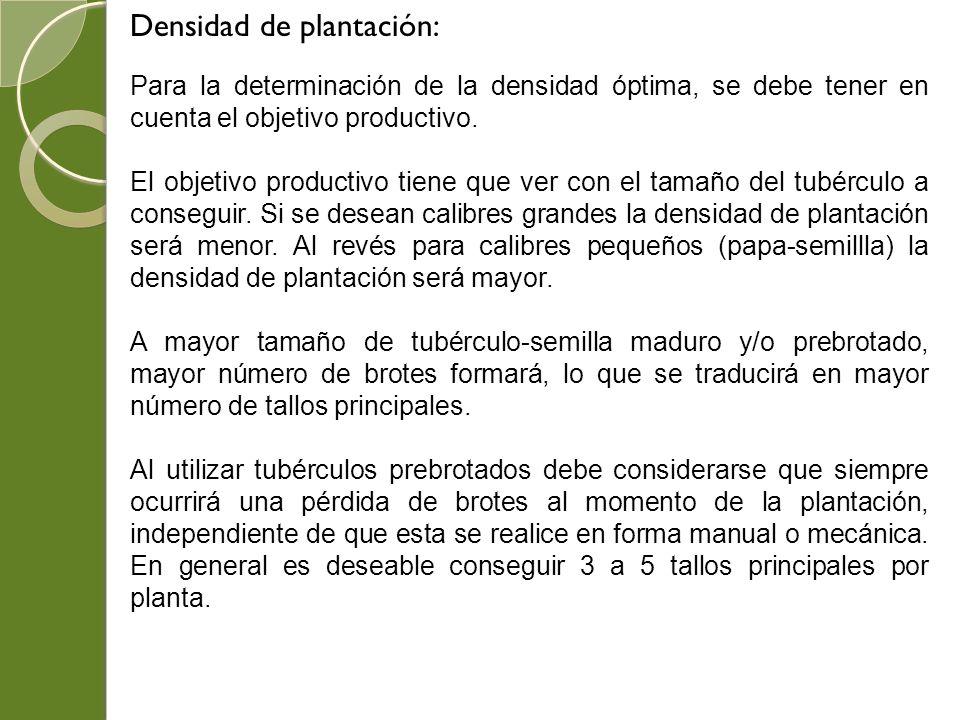 Densidad de plantación: Para la determinación de la densidad óptima, se debe tener en cuenta el objetivo productivo. El objetivo productivo tiene que