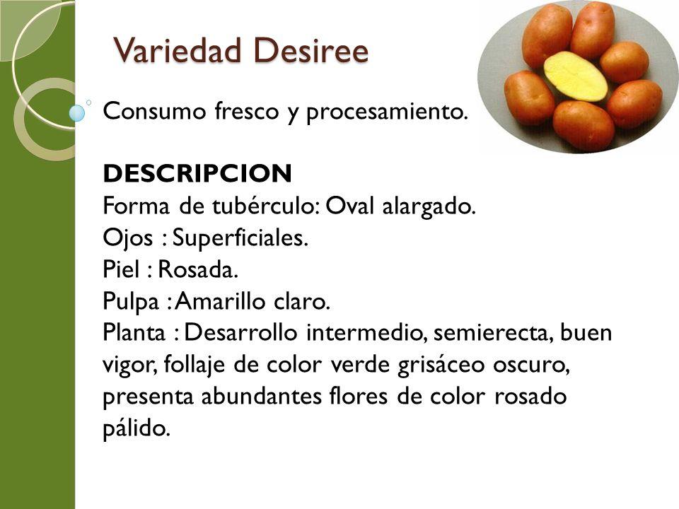 Variedad Desiree Consumo fresco y procesamiento. DESCRIPCION Forma de tubérculo: Oval alargado. Ojos : Superficiales. Piel : Rosada. Pulpa : Amarillo