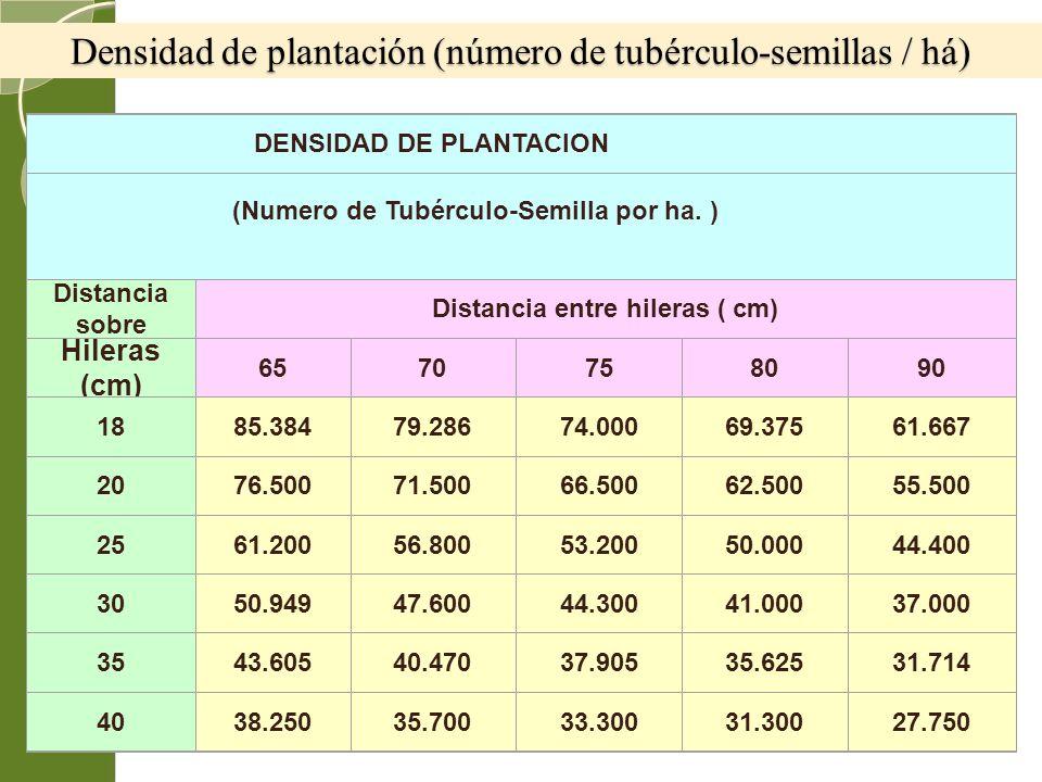 Densidad de plantación (número de tubérculo-semillas / há) DENSIDAD DE PLANTACION (Numero de Tubérculo-Semilla por ha. ) Distancia sobre Distancia ent