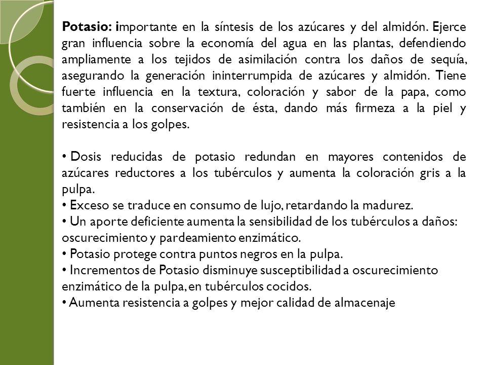 Potasio: importante en la síntesis de los azúcares y del almidón. Ejerce gran influencia sobre la economía del agua en las plantas, defendiendo amplia