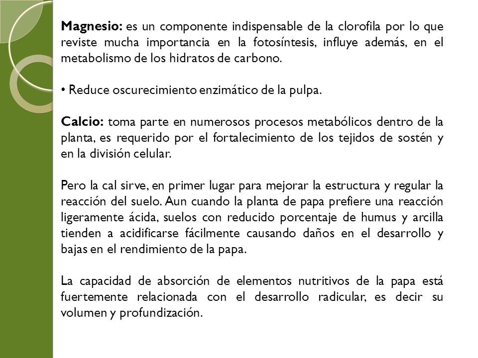 Magnesio: es un componente indispensable de la clorofila por lo que reviste mucha importancia en la fotosíntesis, influye además, en el metabolismo de