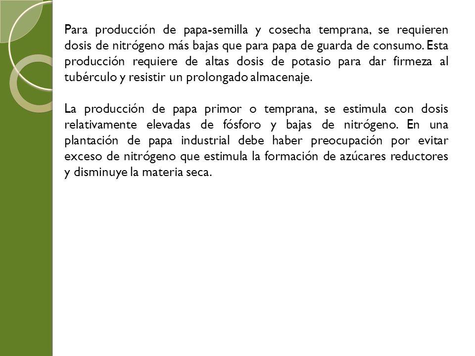 Para producción de papa-semilla y cosecha temprana, se requieren dosis de nitrógeno más bajas que para papa de guarda de consumo. Esta producción requ