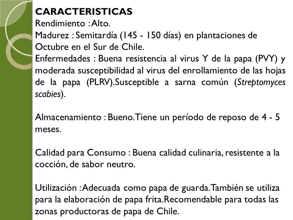 CARACTERISTICAS Rendimiento : Alto. Madurez : Semitardía (145 - 150 días) en plantaciones de Octubre en el Sur de Chile. Enfermedades : Buena resisten