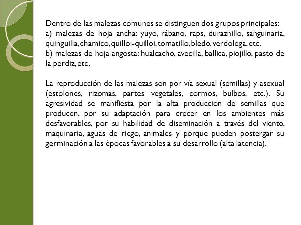 Dentro de las malezas comunes se distinguen dos grupos principales: a) malezas de hoja ancha: yuyo, rábano, raps, duraznillo, sanguinaria, quinguilla,