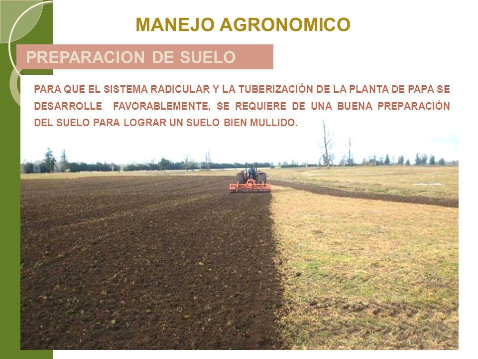 PREPARACION DE SUELO MANEJO AGRONOMICO PARA QUE EL SISTEMA RADICULAR Y LA TUBERIZACIÓN DE LA PLANTA DE PAPA SE DESARROLLE FAVORABLEMENTE, SE REQUIERE
