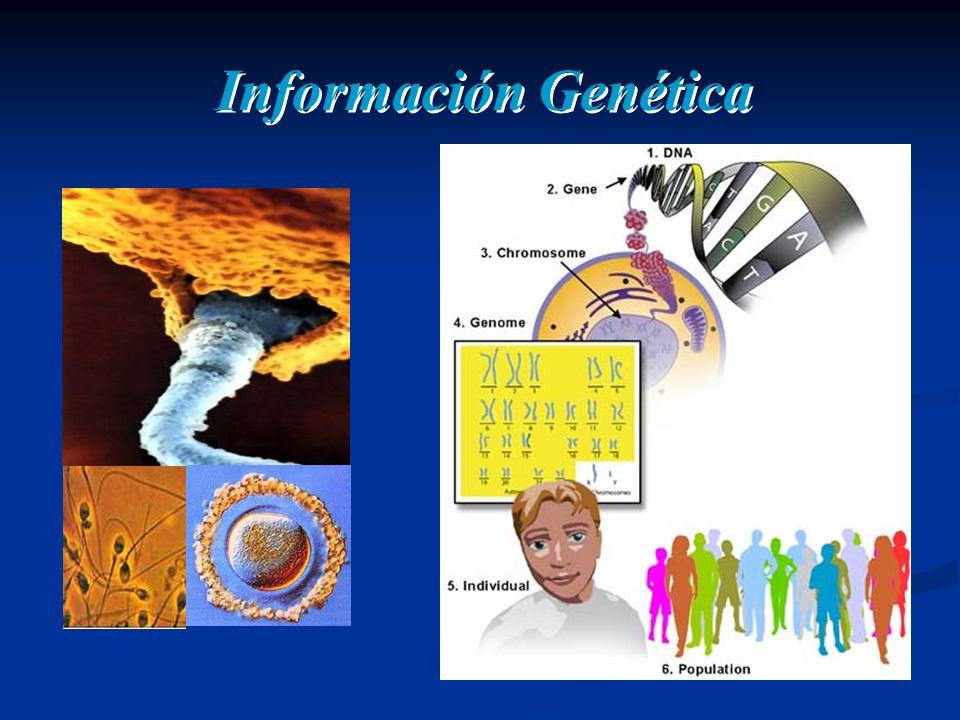 Información Genética