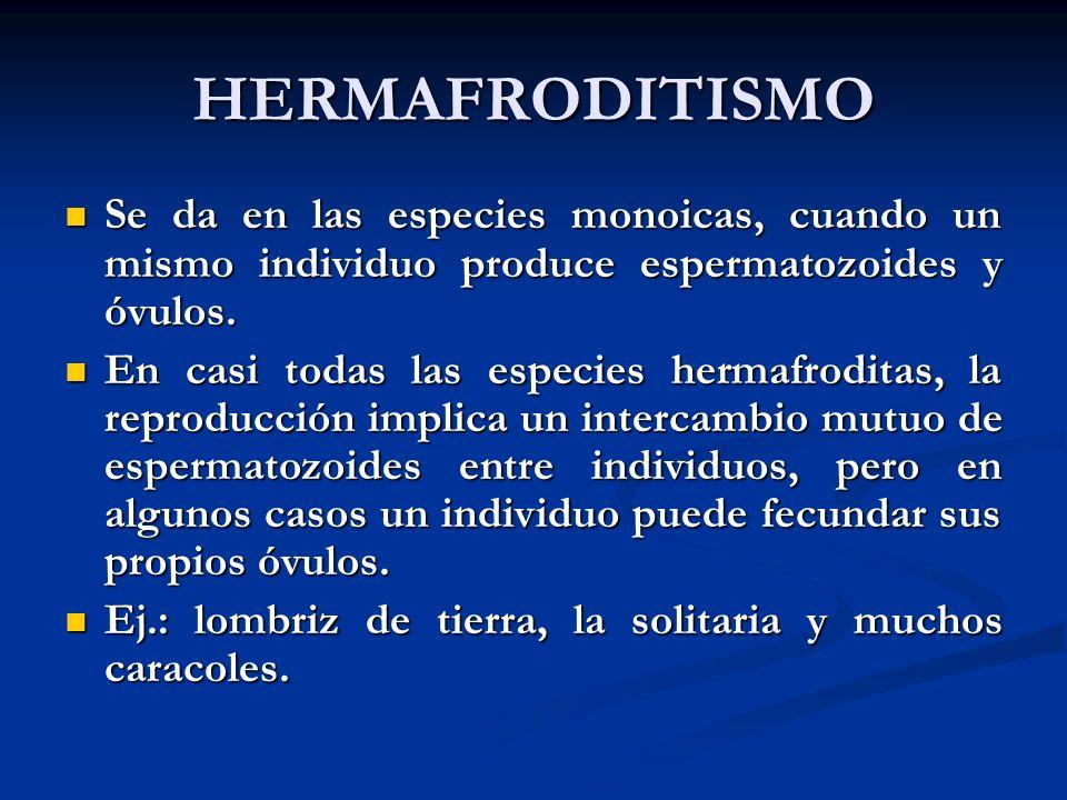 HERMAFRODITISMO Se da en las especies monoicas, cuando un mismo individuo produce espermatozoides y óvulos. Se da en las especies monoicas, cuando un
