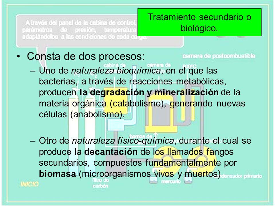 Consta de dos procesos: –Uno de naturaleza bioquímica, en el que las bacterias, a través de reacciones metabólicas, producen la degradación y minerali