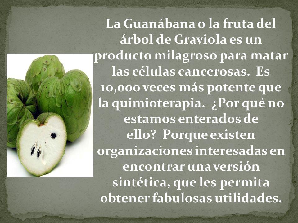 La Guanábana o la fruta del árbol de Graviola es un producto milagroso para matar las células cancerosas. Es 10,000 veces más potente que la quimioter