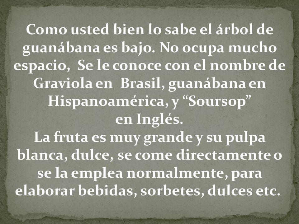 Como usted bien lo sabe el árbol de guanábana es bajo. No ocupa mucho espacio, Se le conoce con el nombre de Graviola en Brasil, guanábana en Hispanoa