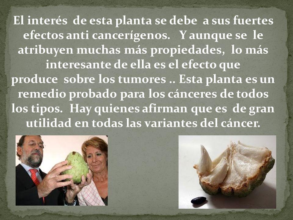 El interés de esta planta se debe a sus fuertes efectos anti cancerígenos. Y aunque se le atribuyen muchas más propiedades, lo más interesante de ella