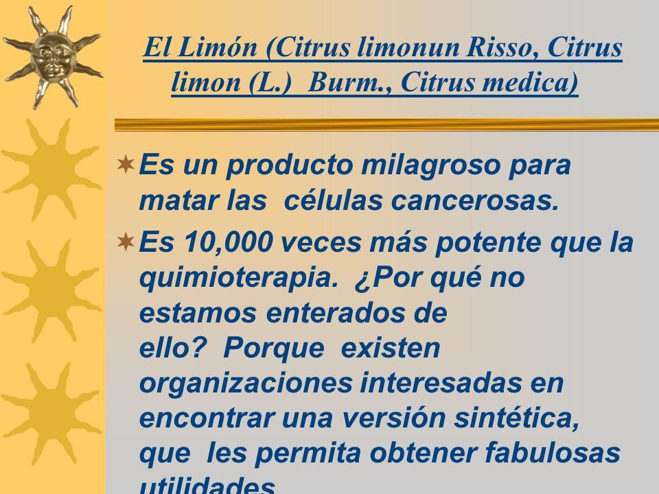 El Limón (Citrus limonun Risso, Citrus limon (L.) Burm., Citrus medica) Es un producto milagroso para matar las células cancerosas. Es 10,000 veces má