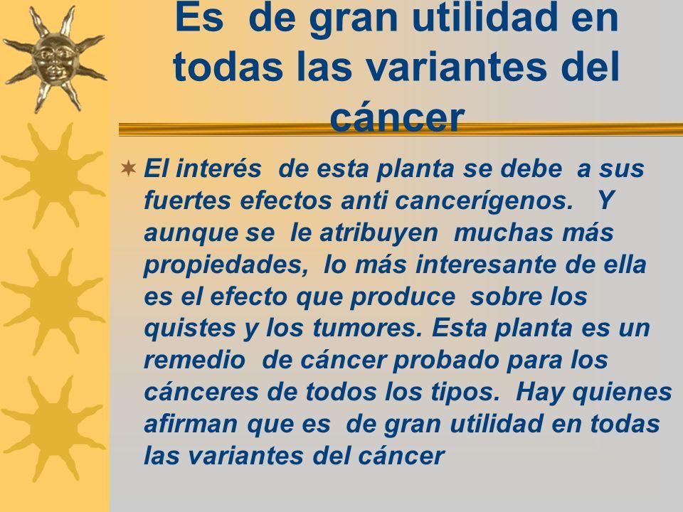 Es de gran utilidad en todas las variantes del cáncer El interés de esta planta se debe a sus fuertes efectos anti cancerígenos. Y aunque se le atribu