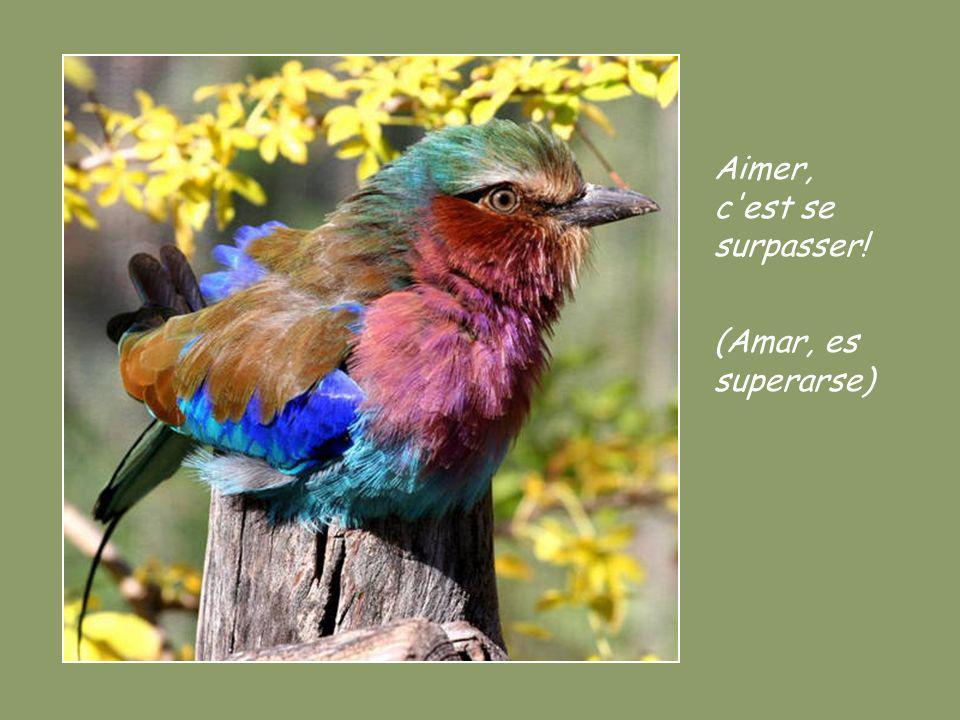 Mon esprit est en paix seulement quand je pardonne au lieu de juger! (Mi espíritu queda tranquilo cuando perdono en vez de juzgar)
