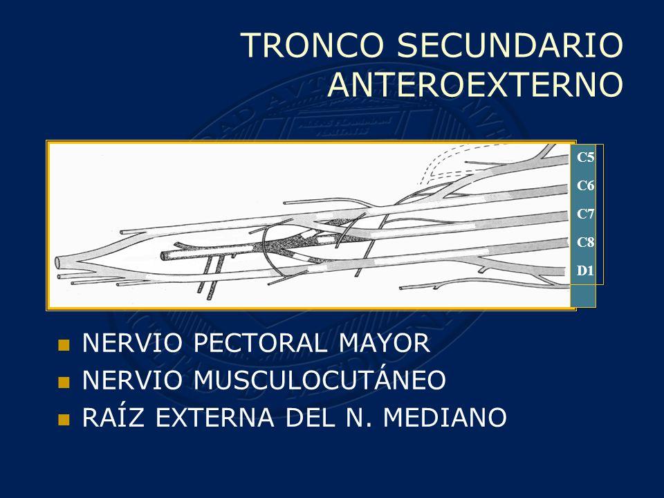 TRONCO SECUNDARIO ANTEROINTERNO N.PECTORAL MENOR N.