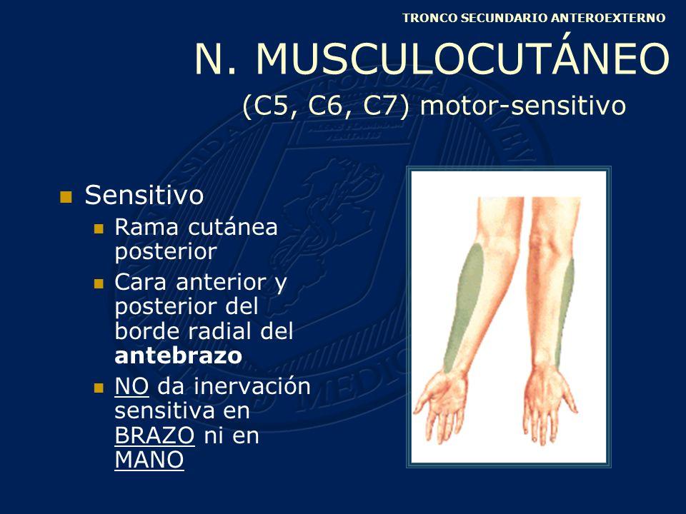 Superficial Vena basílica Parte media del miembro superior Sensitivo Porción inferointerna de la cara anterior del brazo Anterior y posterior del borde cubital antebrazo TRONCO SECUNDARIO ANTEROINTERNO BRAQUIAL CUTÁNEO INTERNO (C8, D1) sensitivo