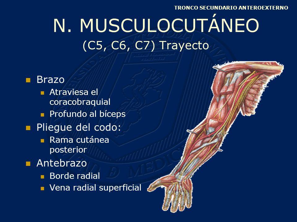 Flexión débil del codo Por parálisis del braquial anterior (más poderoso) y del bíceps braquial Supinación afectada Por parálisis del bíceps braquial (supinador más fuerte) Hipoestesia en cara externa del antebrazo Rama cutánea posterior N.