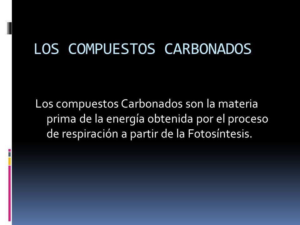 LOS COMPUESTOS CARBONADOS Los compuestos Carbonados son la materia prima de la energía obtenida por el proceso de respiración a partir de la Fotosíntesis.
